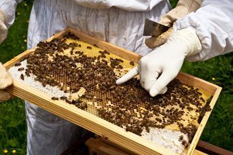 Vétérinaire apicole